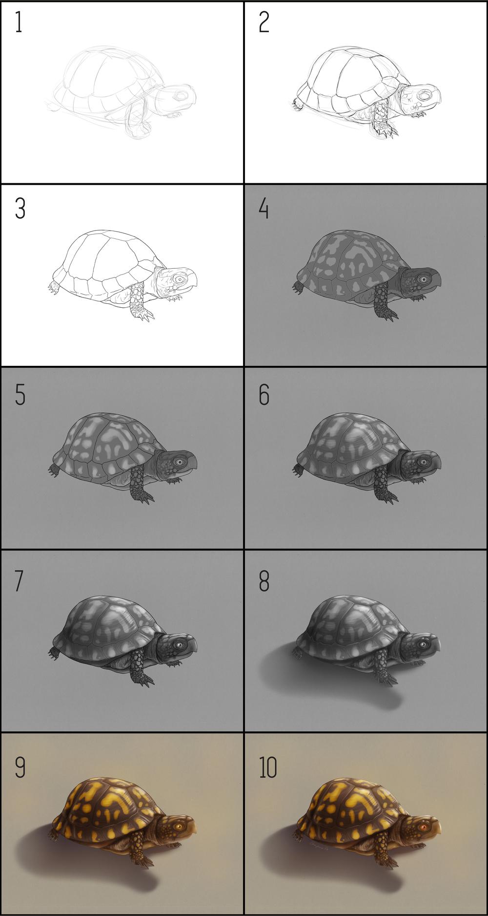turtle_steps.jpg