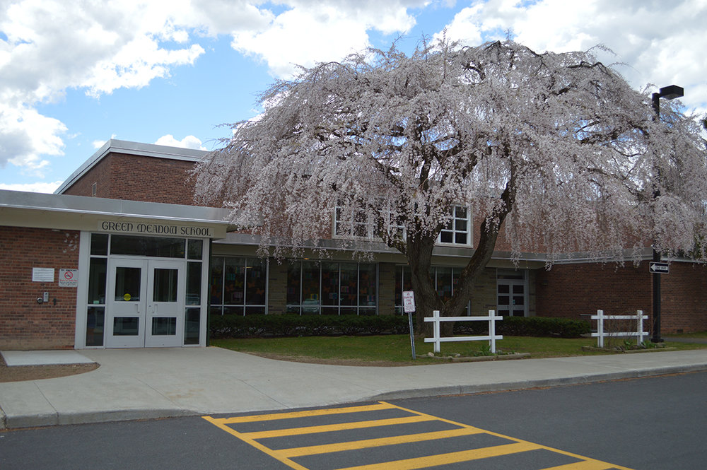 Green-Meadow-tree.jpg