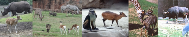 Ungulate Zoo Mixed Species R...