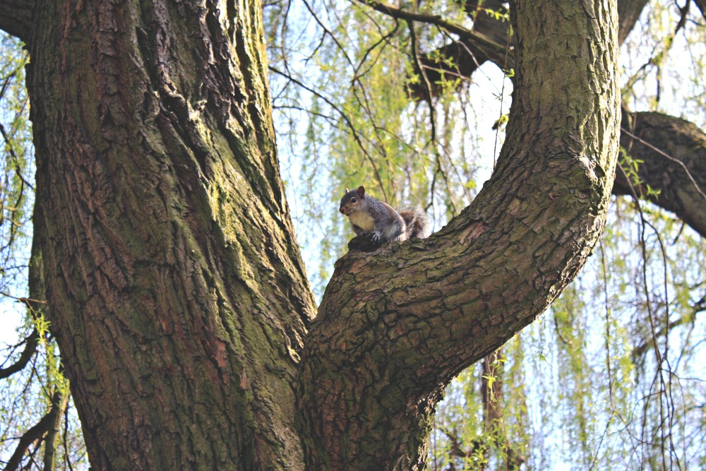Catching up: With friends, squirrel University Park campus, University of Nottingham
