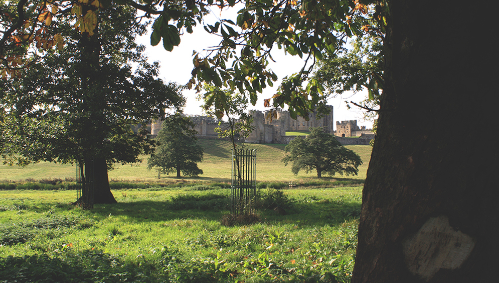 Alnwick-Castle-Tree-Northumberland-Tori's-Tales