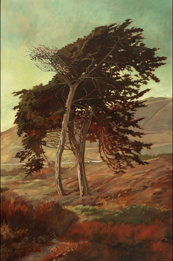 Wind Sculpted Cypress 24x36 oil / linen