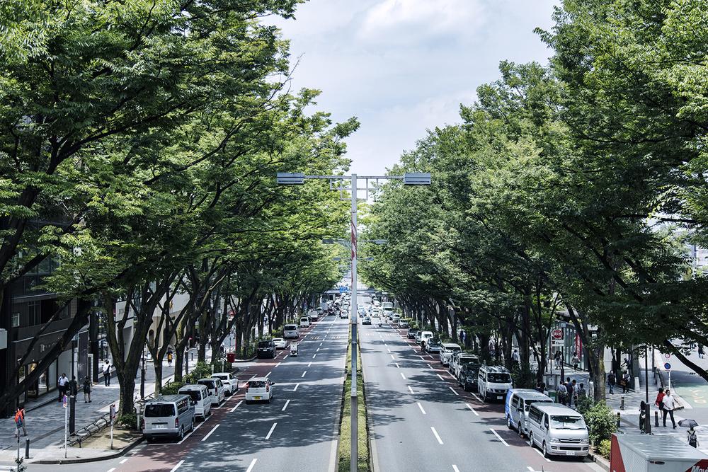 All photo ©Kenta Hasegawa