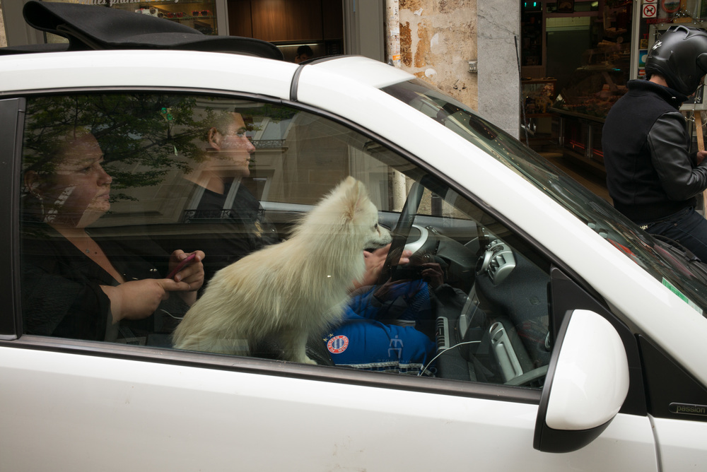123_WHITE DOG IN CARA.jpg