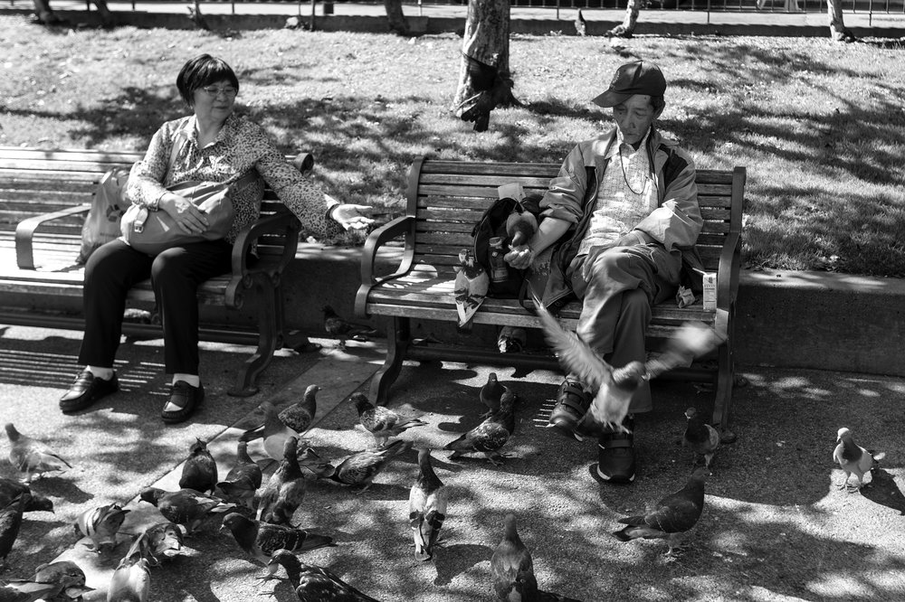 161_Scussel - Portsmouth Square Pigeons B&W.jpg
