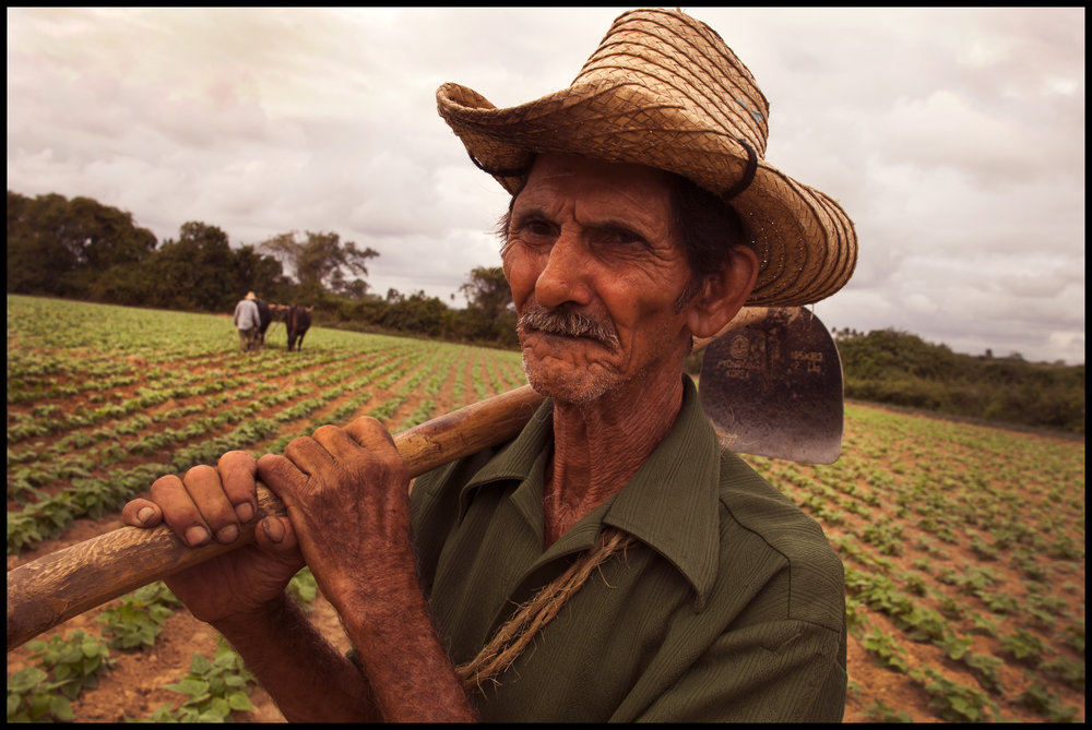 """Peter Turnley_Dec.13, 2006.-Photos of the tobacco region of Cuba, """"Pinar del Rio"""". You will see several scenes of men working in fields:-one scene with a bare chested man with a mustache, Javier Valdez, 40, and Abel Hernandez, 38, howing tobacco rows;-A man with a hat holding a how over his shoulder with a team of  cows driven by another man howing a bean field. The man with the hat is, Pedro Grande Pinto, 72;-A black man howing with another man with a hat, and some times a child in the picture. The black man  is, Humberto Galvez, 63. -You will also see pictures of a wedding in the upper class neighborhood of MIramar. The bride is Floralba Trinchet Perez who married Hugo Permuy Santos, both 27. The were married at the Jesus de Miramar Church. The telephone of Floralba is 209 3434."""