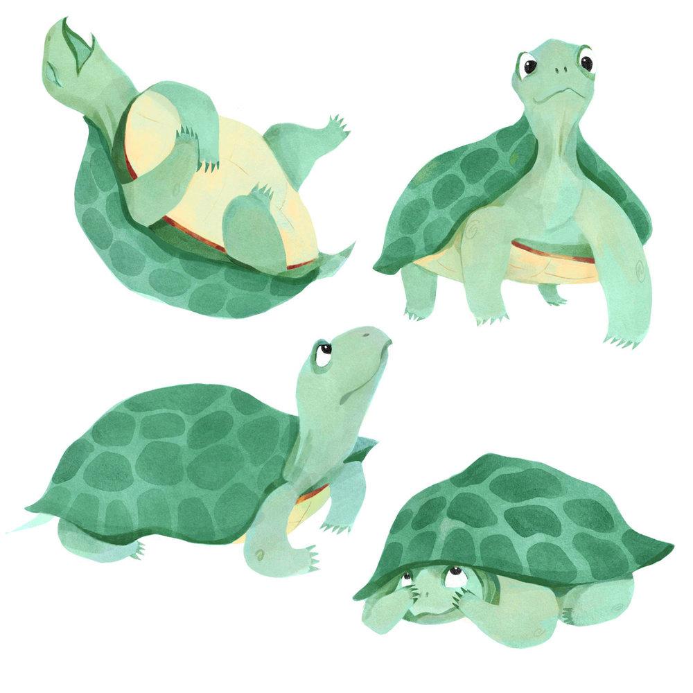TurtleContrast.jpg