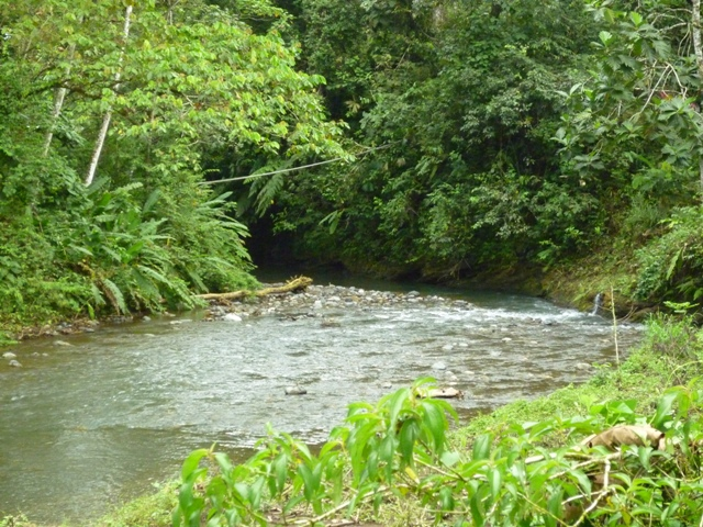 The Rio Tigre is located right in front of the Casa los Suenos property with several swimming holes and waterfalls with-in walking distance.