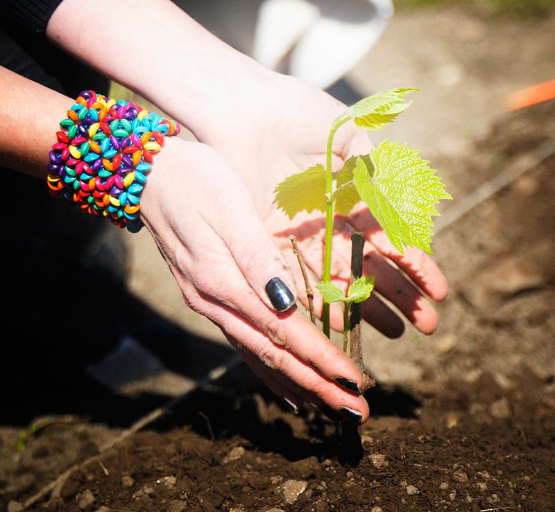 Rohenäpp Taivi annab taimele hinge ja õpetusi pikaks elueaks