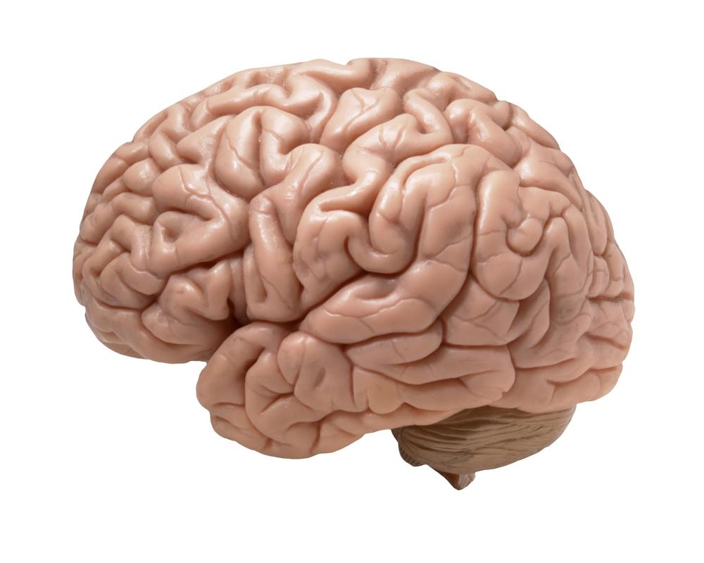 Rechte oder linke Gehirnhälfte - wer macht was? — Gerstbach Design ...