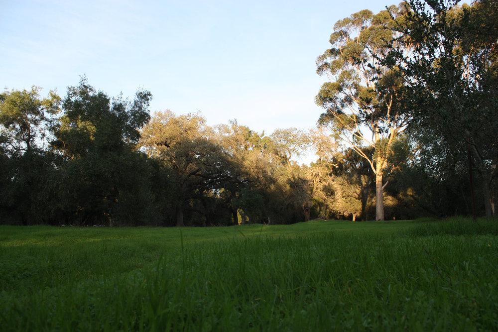 Stanford Park