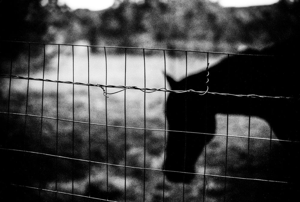 Horse, 2015