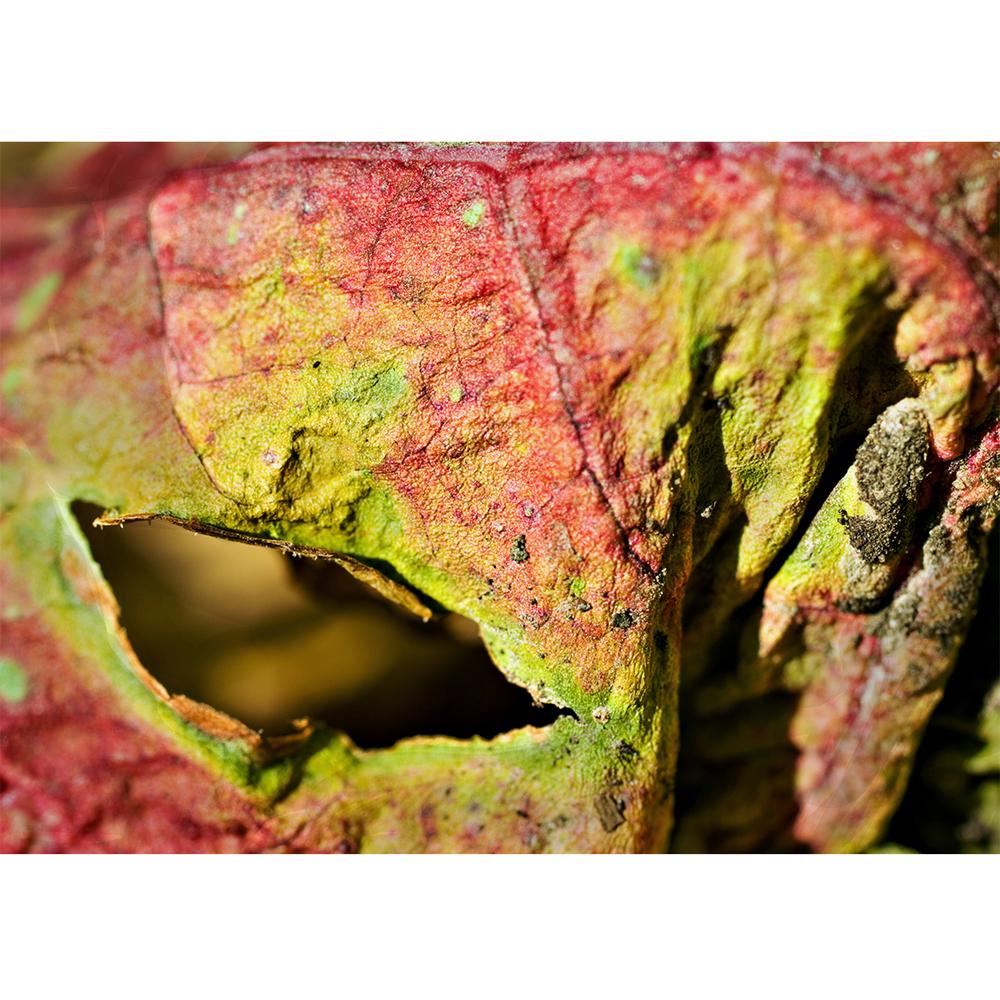 eyes - rhubarb #18