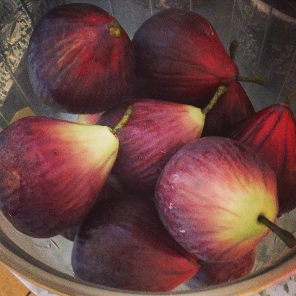 Fake figs