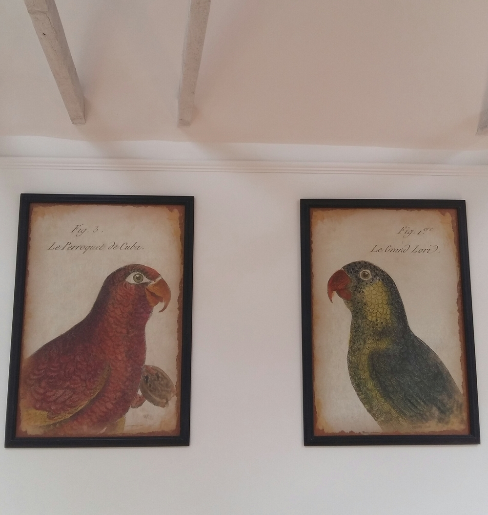 Large bird prints upstairs in the gallery