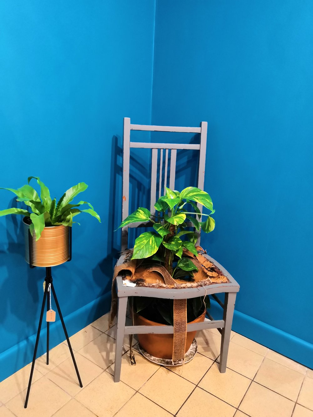 Broken chair = planter