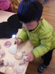 Exploring shells