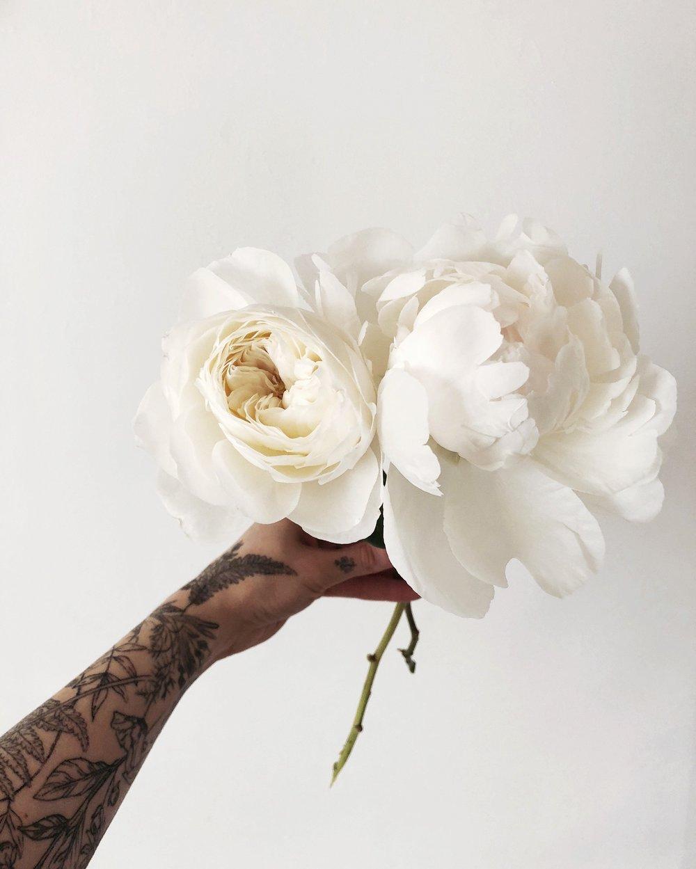 garden rose vs. peony