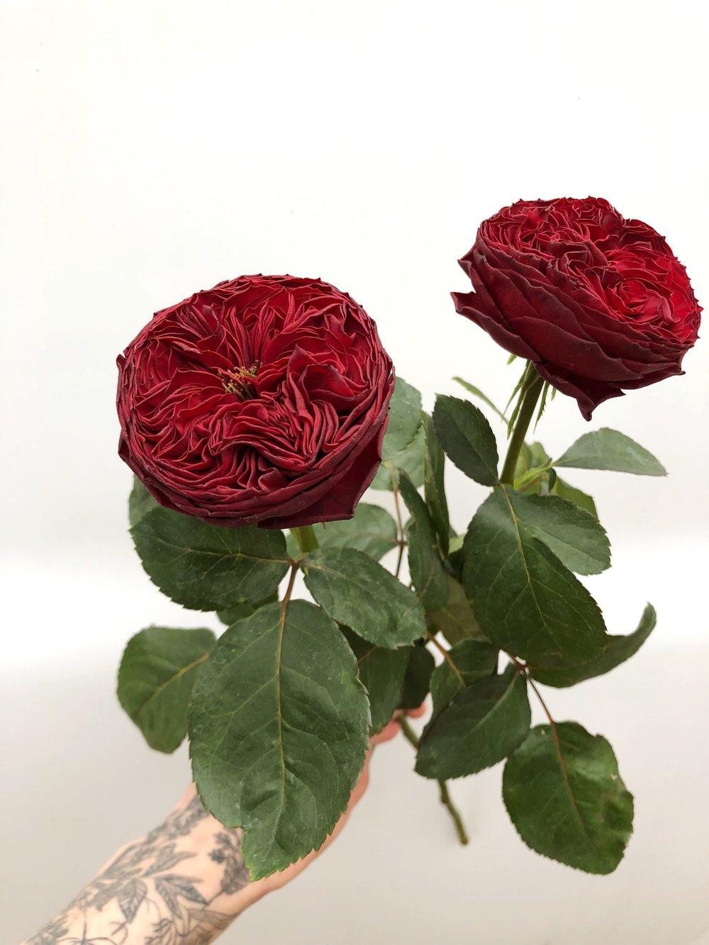 grand jubilee garden rose