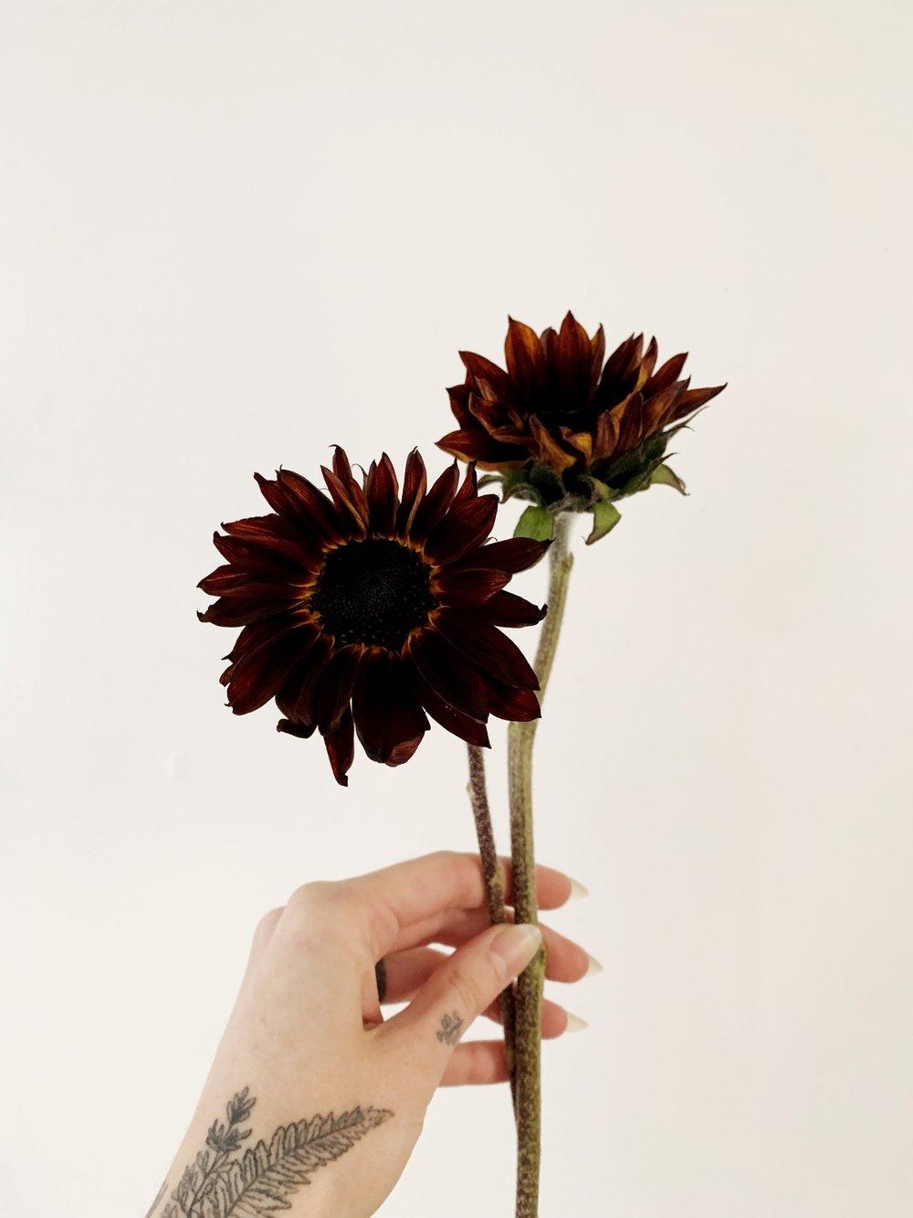 chocolate cherry sunflower