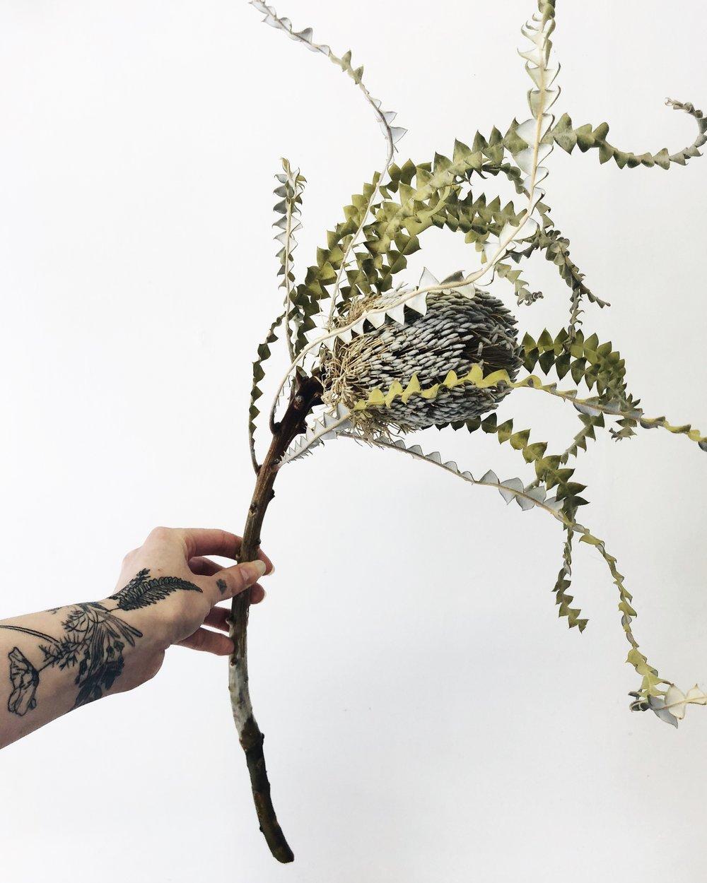 banksia protea