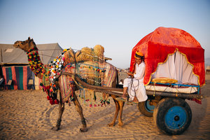 field-trip-india-team-woodnote-jaipur-pushkar-camel-fair-rajasthan-rajahmundry-andhra-pradesh-orphanage-elephant-landing-21.jpg