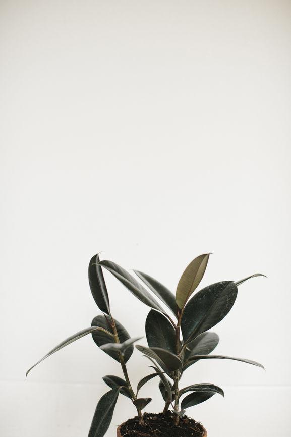 Dark Green Leafy Plant