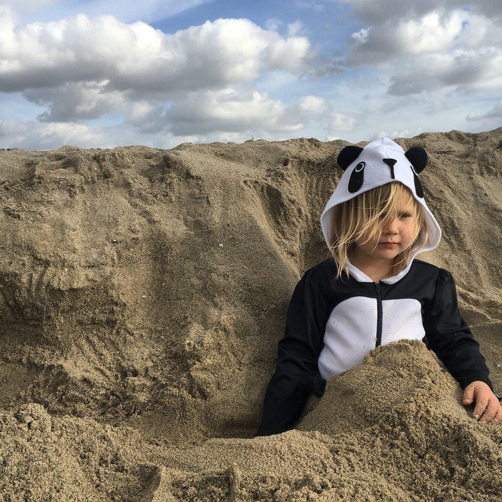 First Sand Panda
