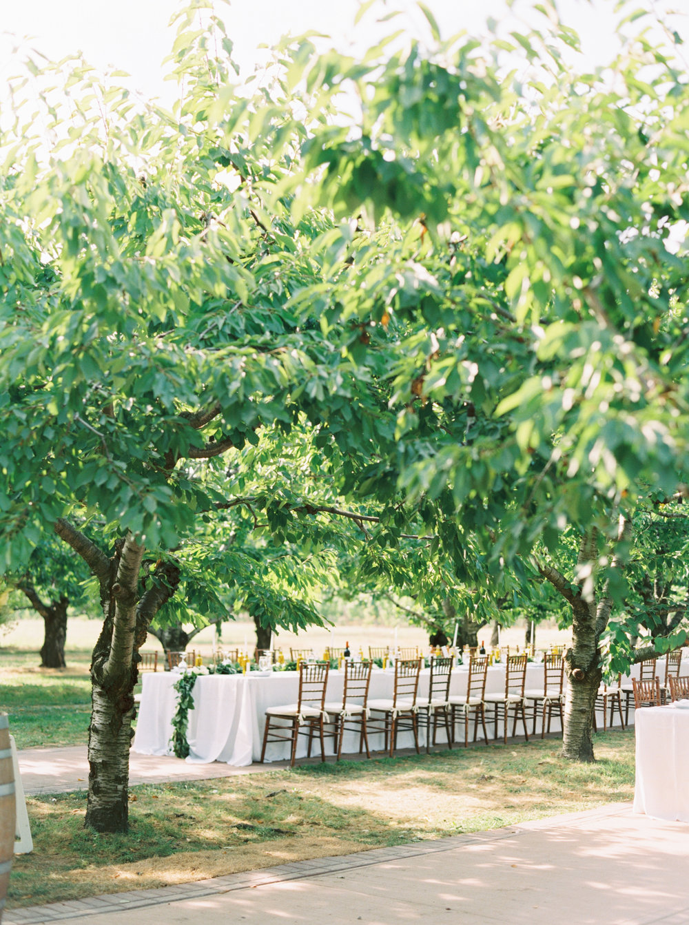 gracewood-kurtz-orchards-toronto-wedding-photographer-kurtz-film-richelle-hunter-cassandra-zac-dalpe-previews-30.jpg