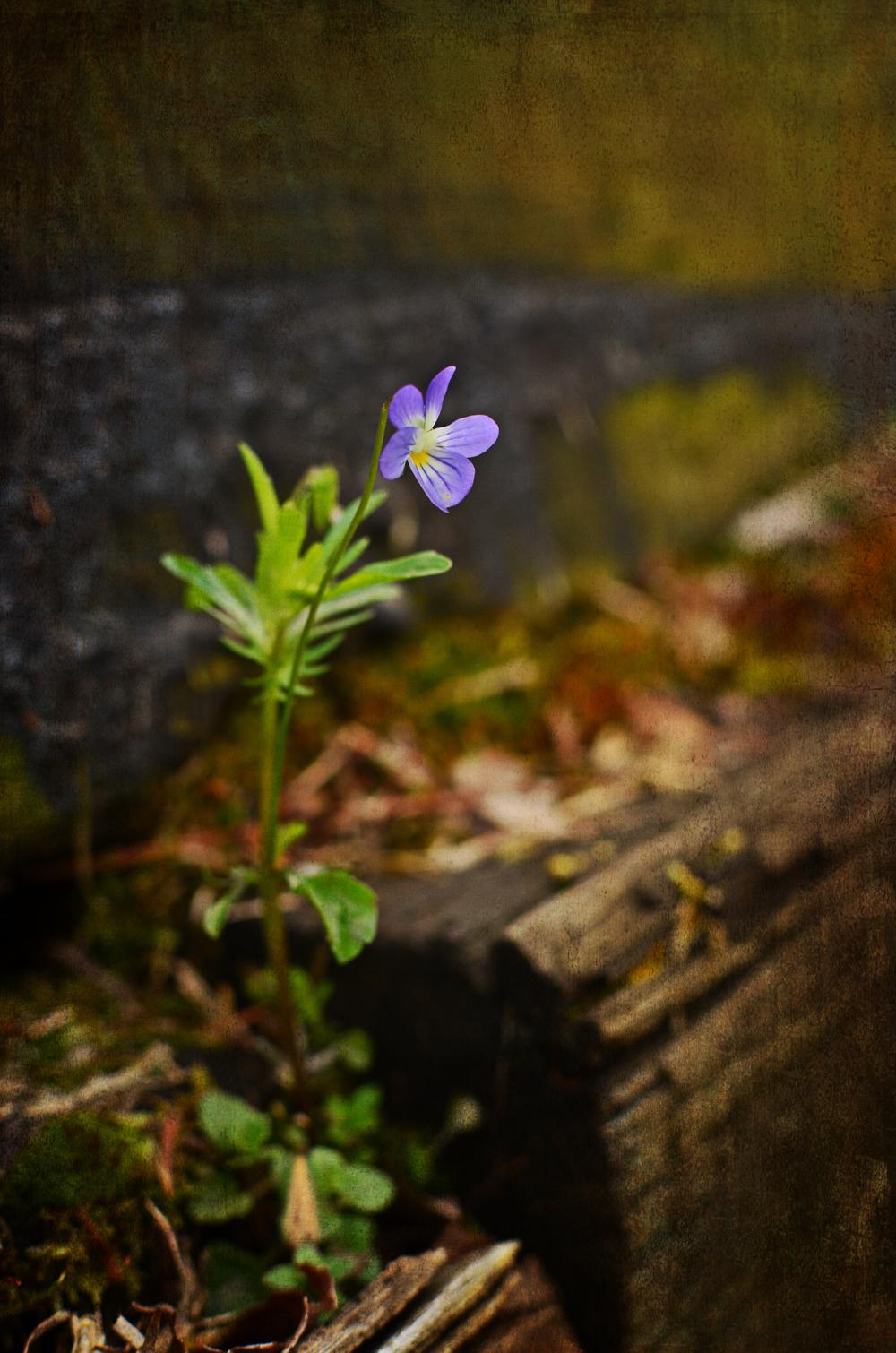 Flower on a ledge