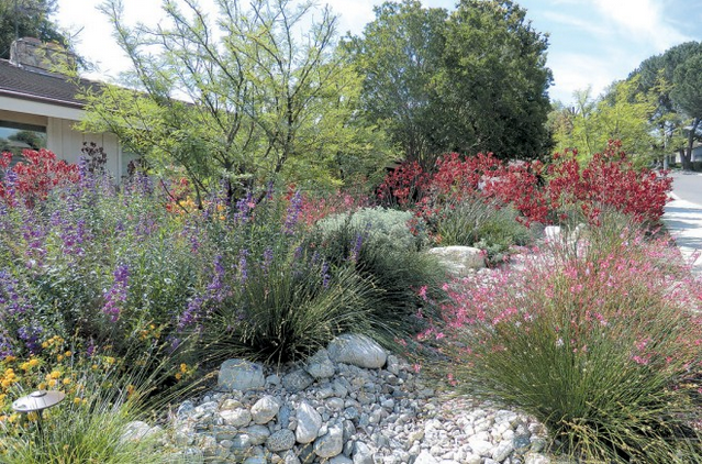 Judith Carlson via Pacific Horticulture Society . This yard features a dry creek bed, Purple garden penstemons (penstemon hybrids) and Kangaroo Paw (Anigozanthos 'Big Red')