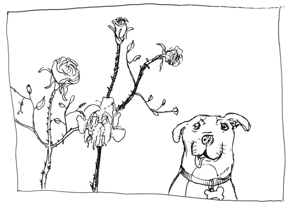 DOG AND ROSES (2016)