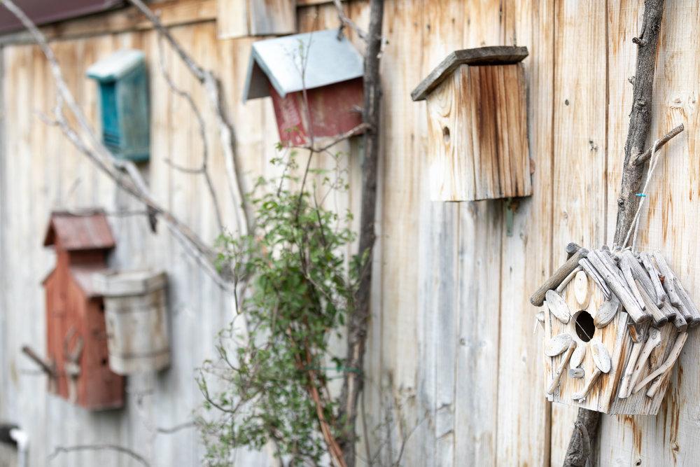 birdhouse-street.jpg