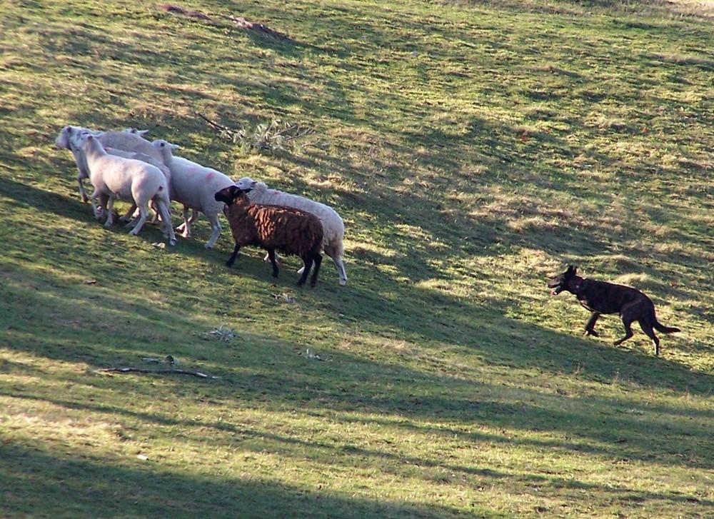 skyla-herd.jpg