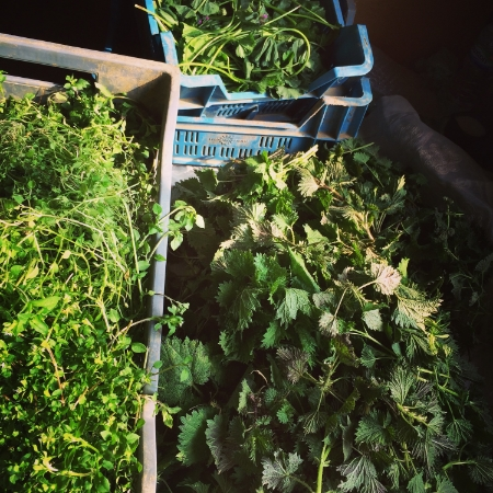 Crates of beautiful herbs collected at Ashurst Organics