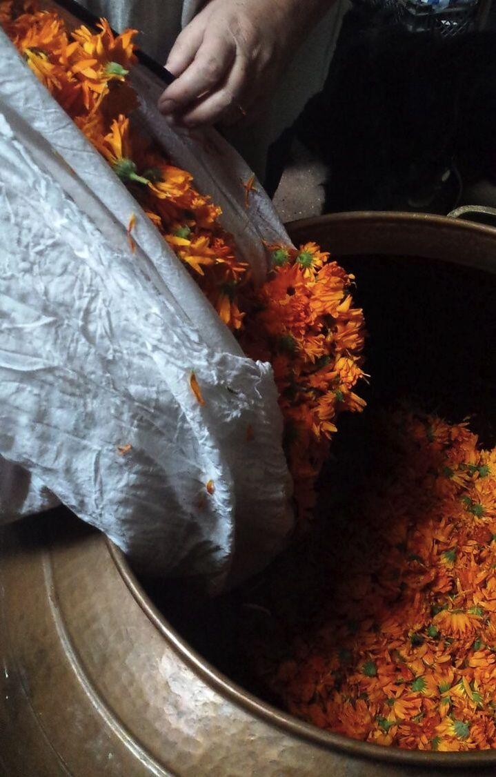 Distilling Calendula
