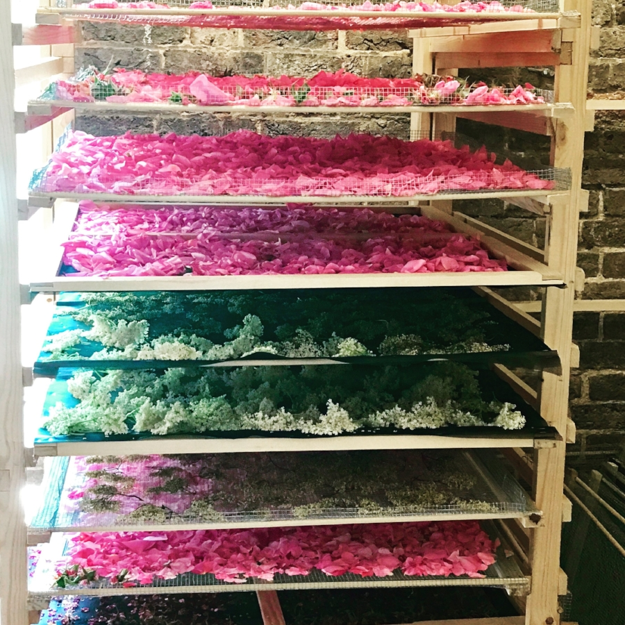 A.S APOTHECARY drying racks with Roses and Elderflowers freshly picked