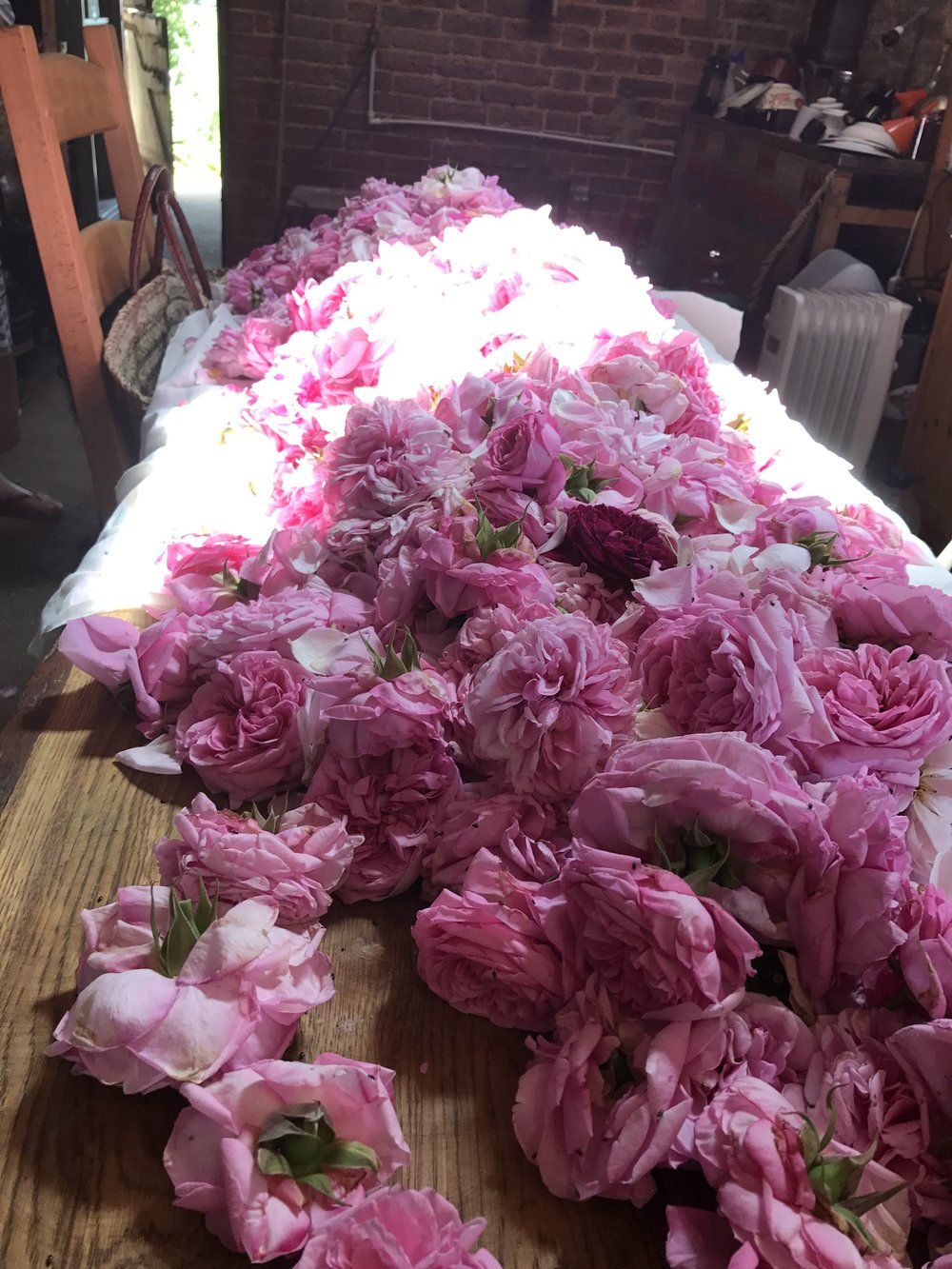 An abundance of roses on the barn table