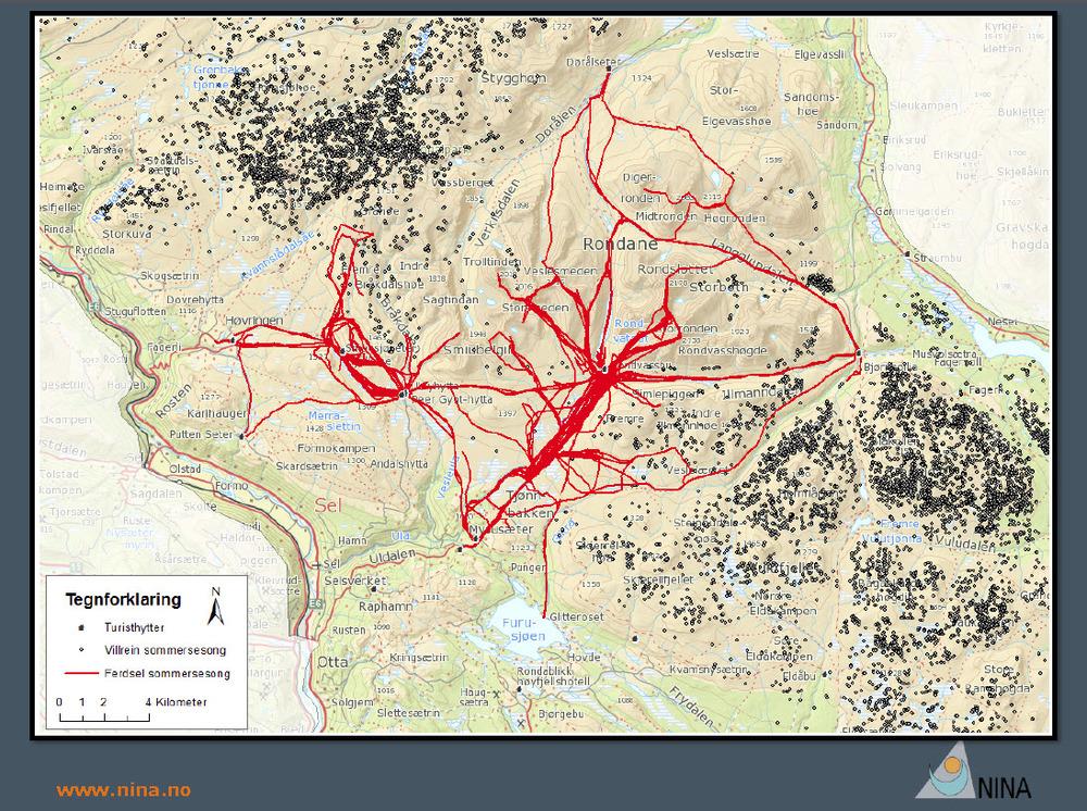 """Kartplott som viser ferdselen på de mest benyttede turstiene i sommersesongen sentralt i Rondane (rød farge) og GPS-plottene av villrein (mørk farge). Villreinen holder seg på """"betryggende"""" avstand."""