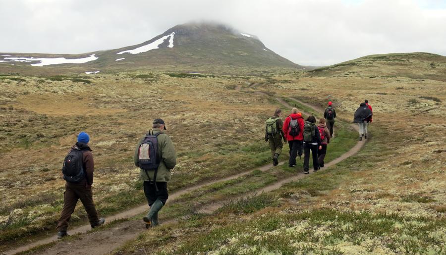 Forollhogna (1332 m.o.h.) i horisont. Her er folk på tur inn stien sørfra. Foto: Arne Nyaas