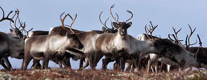 Jakttida på Hardangervidda utvides med 12 dager, f.o.m. 01.10.14 t.o.m. 12.10.14. Illustrasjonsfoto: Arne Nyaas