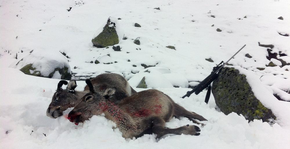 For mange jegere ga den utvidede jaktperioden et godt resultat. Foto: Anders Mossing