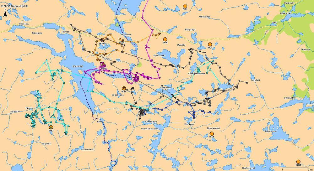 FireGPS-merkede dyr i området sør for Roskrepp for tiden. Fig: NINA/www.dyreposisjoner.no