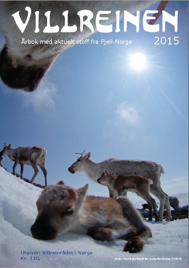 """""""Villreinen 2015"""" selges/distribueres nå. Årboka er på 108 sider og inneholder 41 artikler. """"Villreinen"""" har vært utgitt årlig siden førsteutgaven i 1986.Foto forside: Norsk institutt for naturforskning (NINA)"""