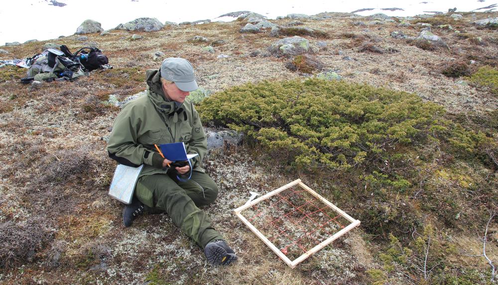 Vegetasjonsanalyse på vinterrabb. Foto: Anders Mossing/NVS