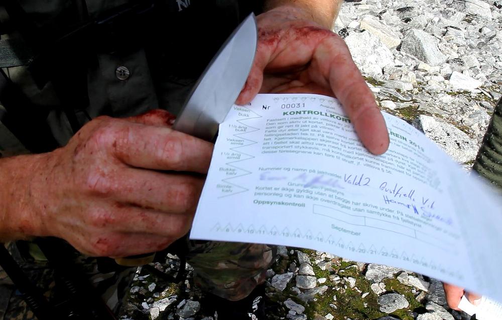Alle dyr som skal felles må følges av en fellingstillatelse og et kontrollkort. Foto: Anders Mossing/NVS
