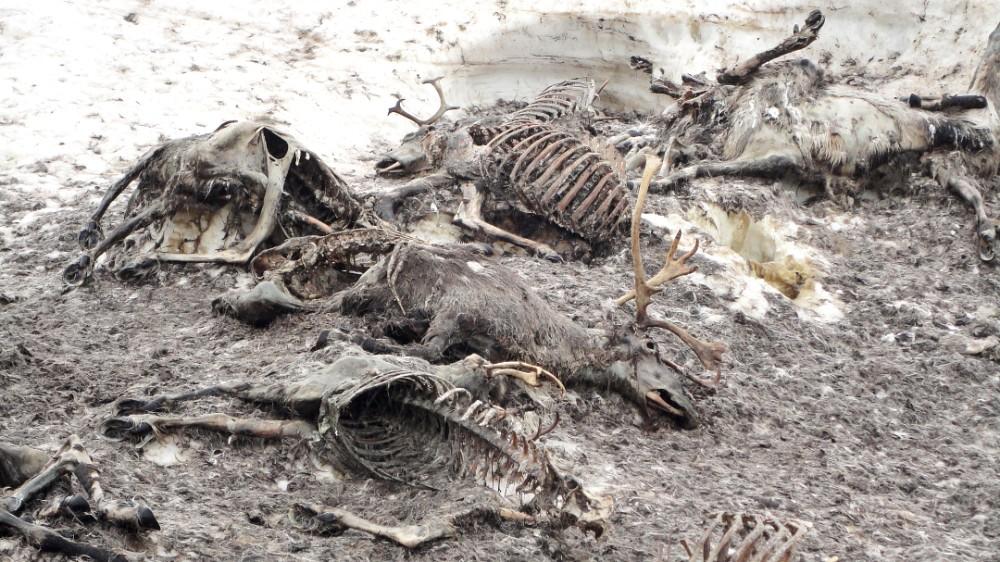 Minst 21 dyr ble avdekket under fotturen. Foto: Hans Christian Tenol-Tuxen Lilleøren.