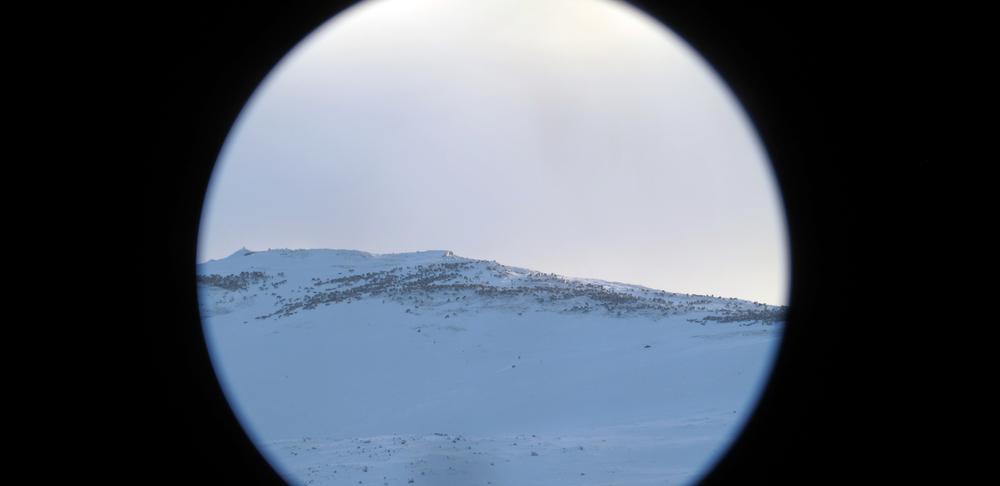 En av villreinflokkene i nærheten av Rv7 fotografert gjennom teleskop. Foto: Petter Braaten/SNO