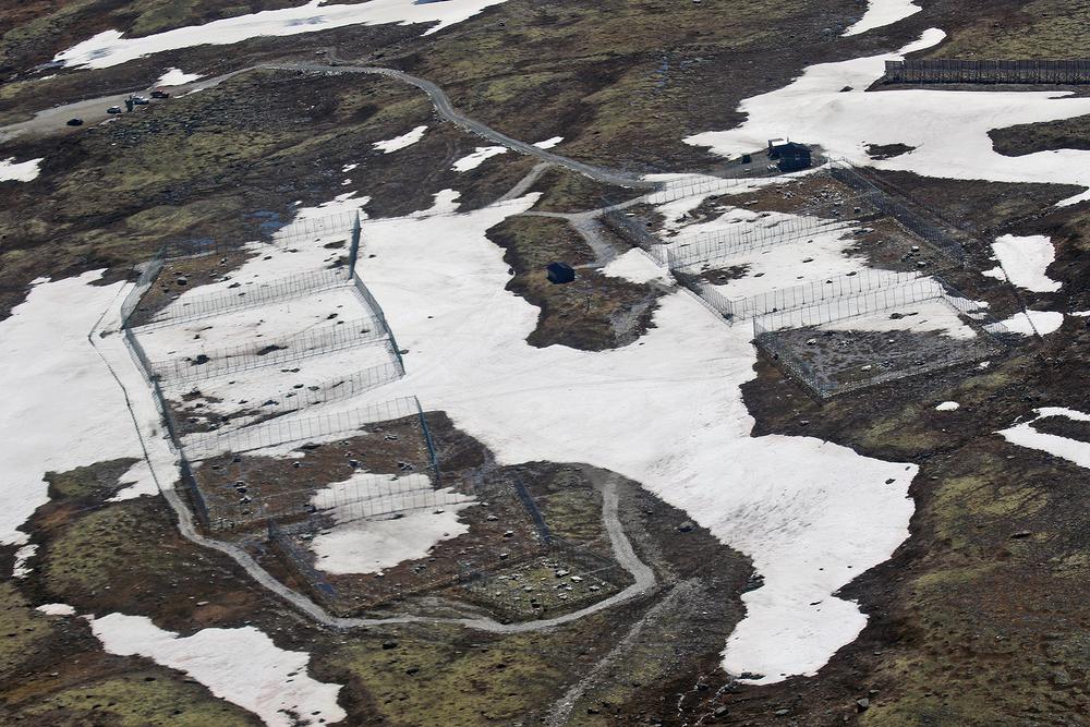 Oppdal 27. juni 2015: Avlsstasjonen for fjellrev på Sæterfjellet. Foto: A. Nyaas