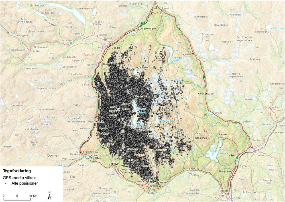 Alle posisjoner fra GPS-merka villrein i Knutshø villreinområde i løpet av prosjektperioden.